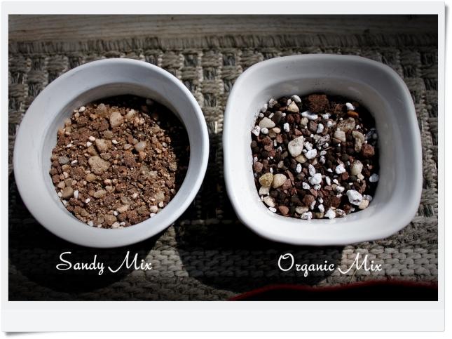 sandy_organic